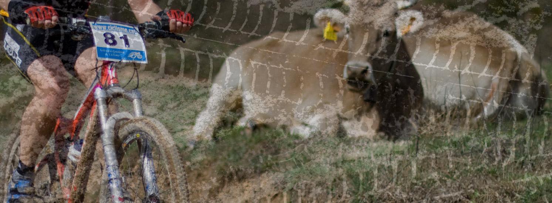 ucll-bici-vaca-01